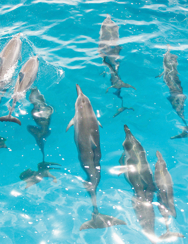 Activities_EcoTour_Dolphins_web